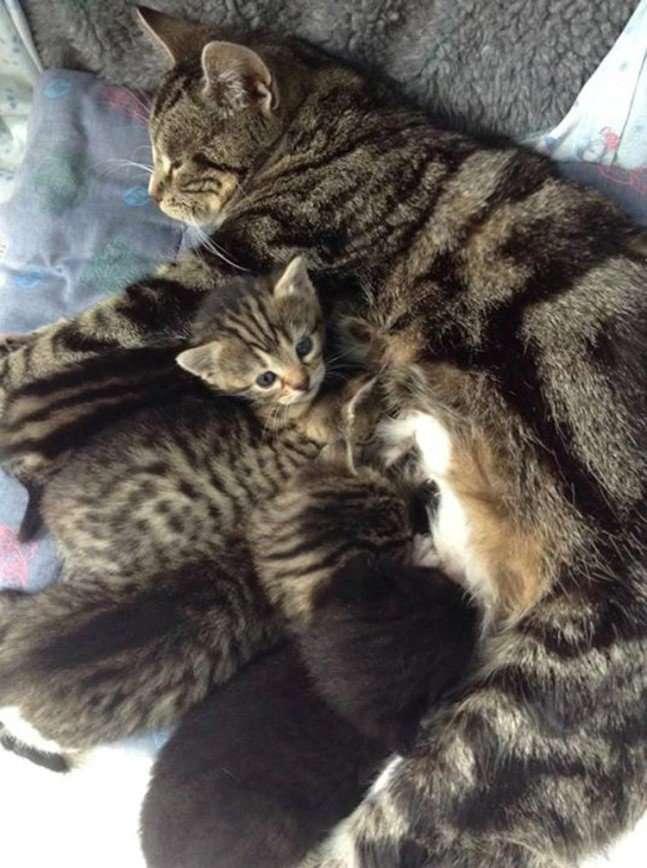 Кошка разыскала своих пропавших котят в ветклинике
