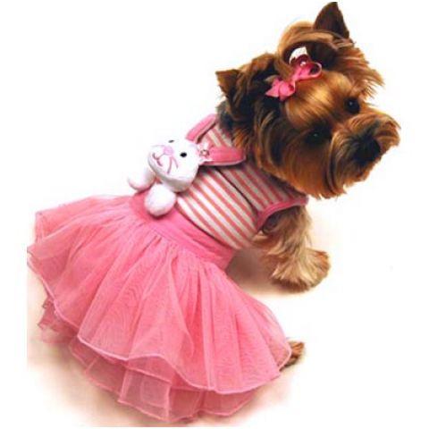 Собака в юбочке