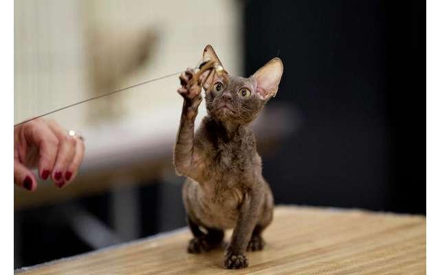 10 мест, в которых обожают кошек