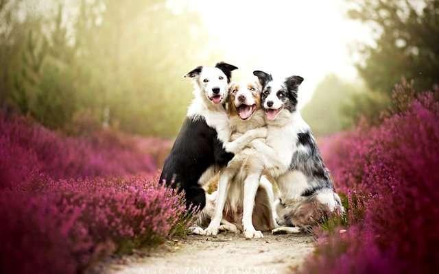Алиция Змусловская и ее любимые собаки
