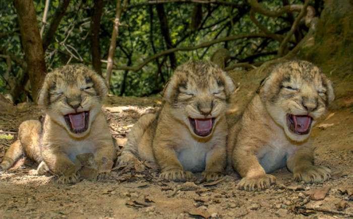 Удивительные животные из разных уголков мира, запечатлённые в живой природе